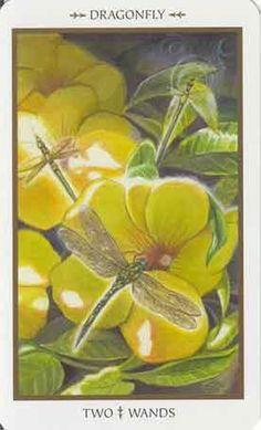 animals-divine-2-of-wands