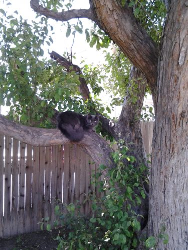 Fuzzy Kitten in a tree, from May 2014.